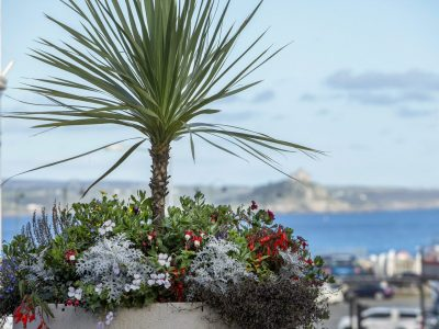 Penzance in Bloom
