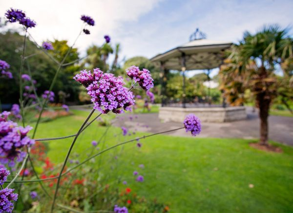 Visit Penzance, Cornwall, and you'll see tropical gardens and parks Morab Gardens Penzance